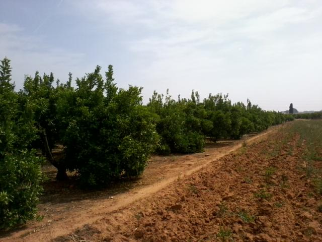 Surveys on crop areas and yields and supply of citrus fruits in the Valencian Community